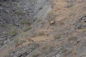 عکس یک 3 300x200 - تخریب محیط زیست به بهانه ی کاهش مسیر یک روستایِ «خاص»
